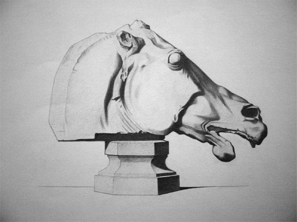 Bargue drawing of a horse head